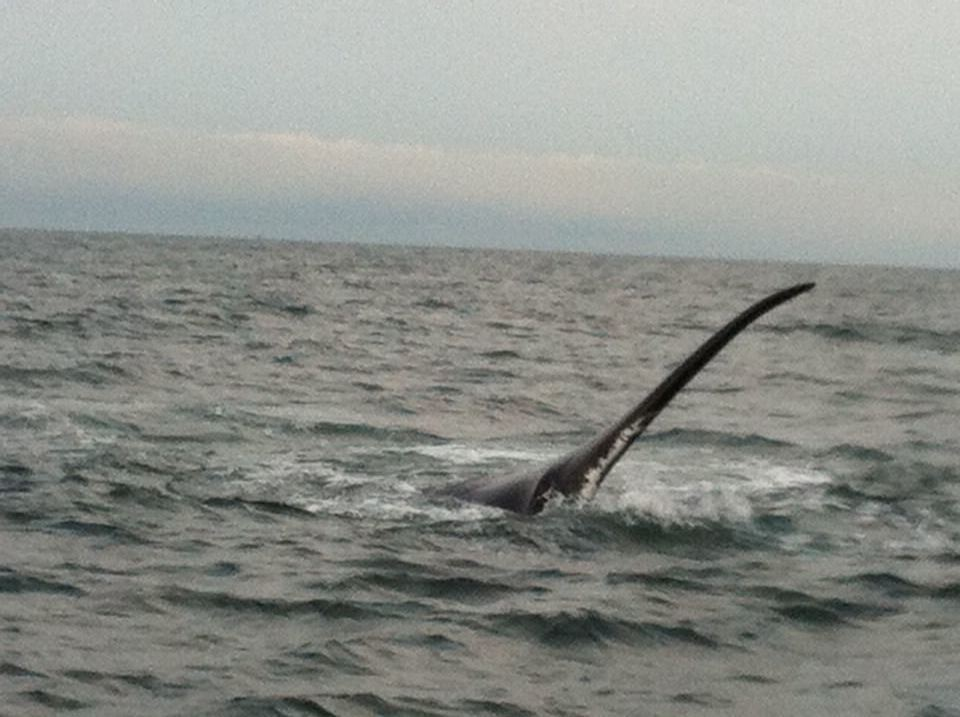 whale_fin2.JPG