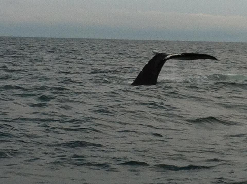 whale_tail.JPG