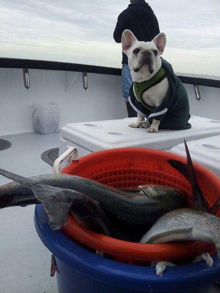Mack Bluefish.jpeg