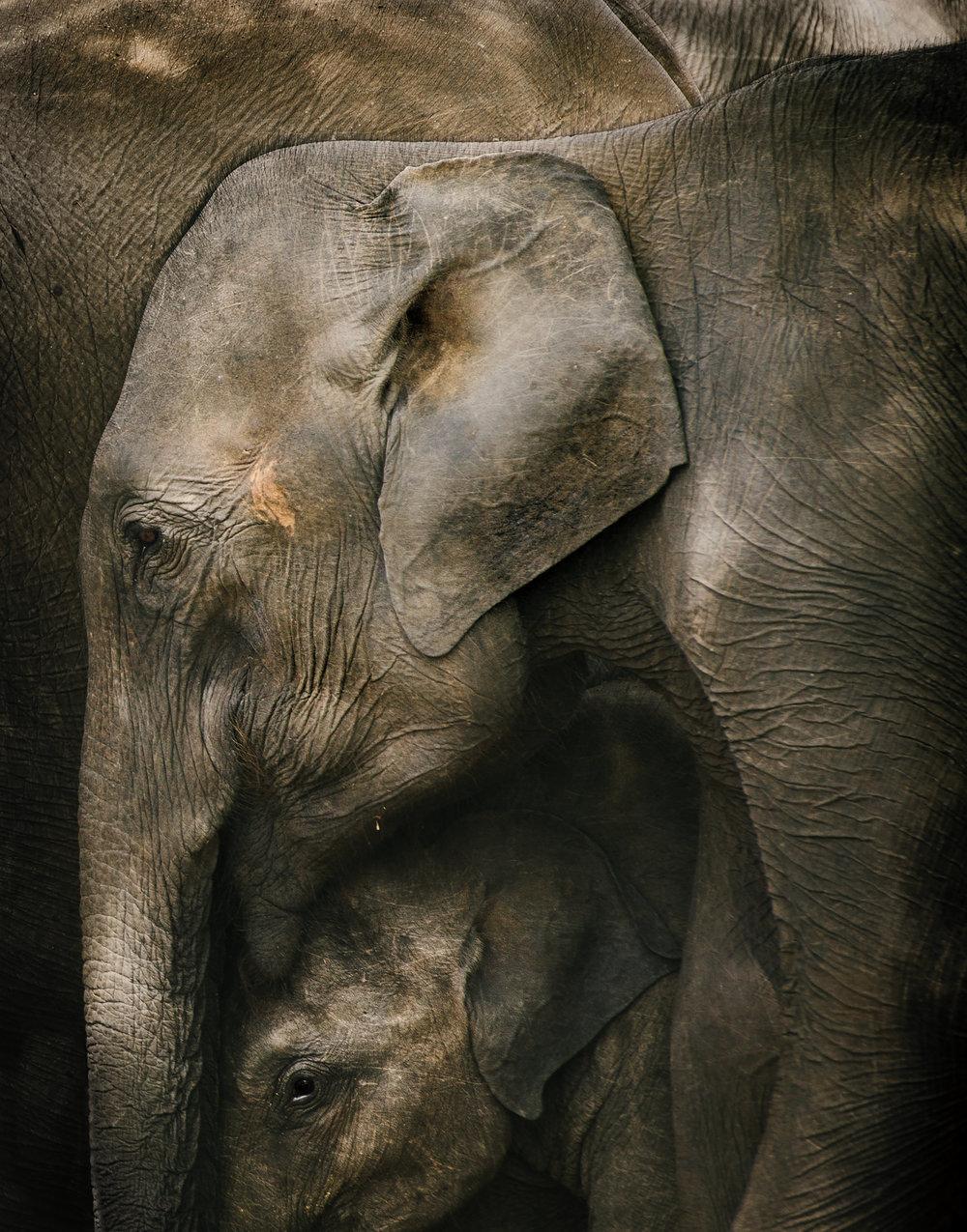 101_ELEPHANTS.JPG