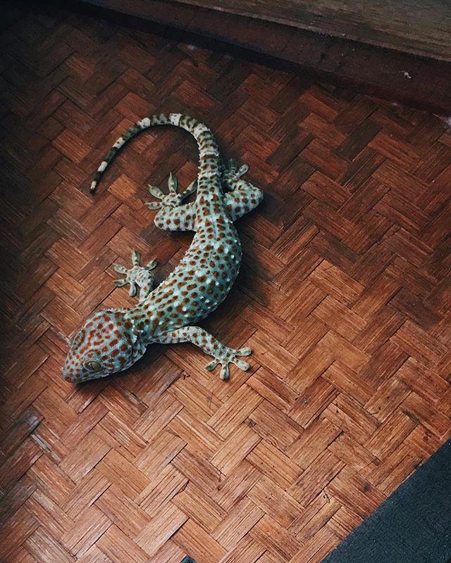 Geckos likes this place.  #pyramidyogacenter