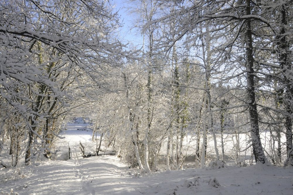 forest snow.jpg