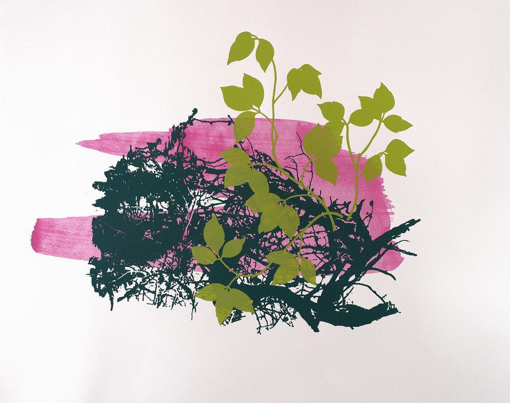 """Emerging Ivy   Silkscreen print 19 x 24"""""""