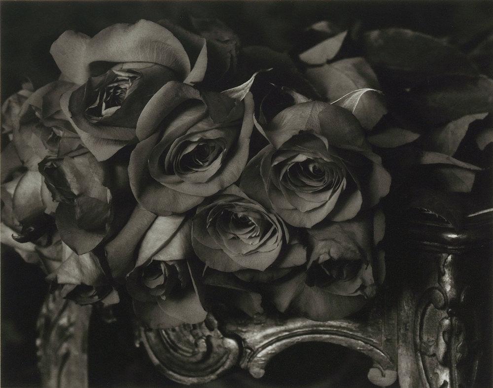 Elvira_Piedra_Roses in Winter.jpg