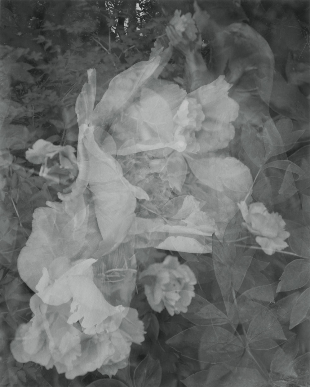 Elvira_Piedra_Breathing in Flowers, Linwood Gardens, 2007.jpg