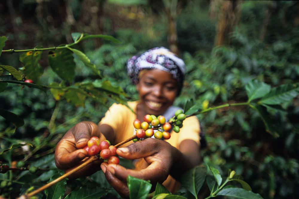 coffeepicker_ Ethiopia .jpg