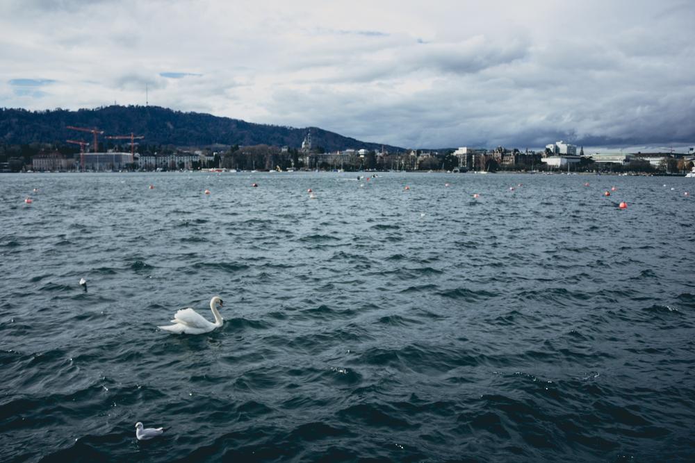 Suiza-03.jpg