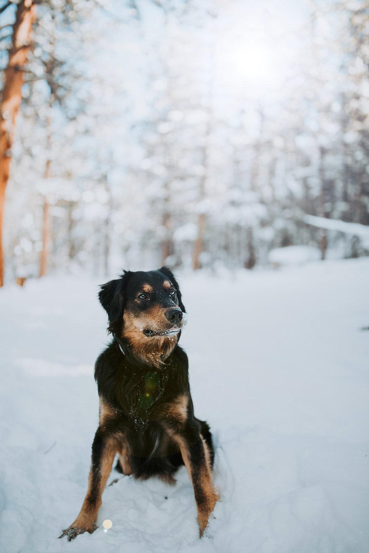 Anna Sees Photography | Good Boy Grua