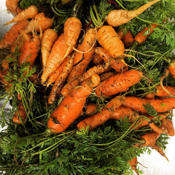 thumbelina carrots