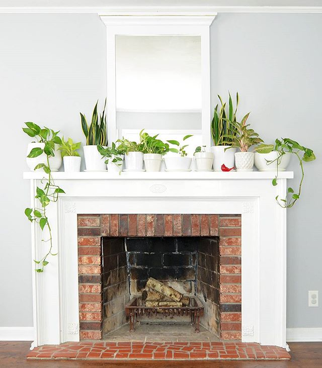 🌱🍃🌿One of my favorite spots in the house (unless it happens to be one of those rare days that a plant dies). 😜 #plantsofinstagram #mantledecor #leenbdesign #fireplace #interiordecor #interiordesign #stlcardinals