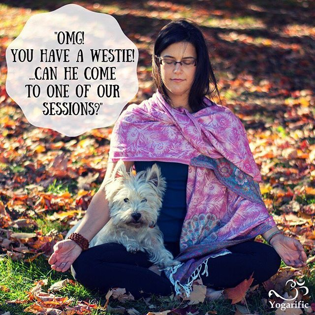 "After our first session, I provided my new private client with a YouTube link to a simple guided meditation I recorded. This Type A CEO was all business during our session so I was tickled with joy when her email response read ""OMG! You have a westie! ...Can he come to our sessions?"" . YES!    He should be a #TherapyDog . #yoga #PrivateYoga #OttawaYoga"