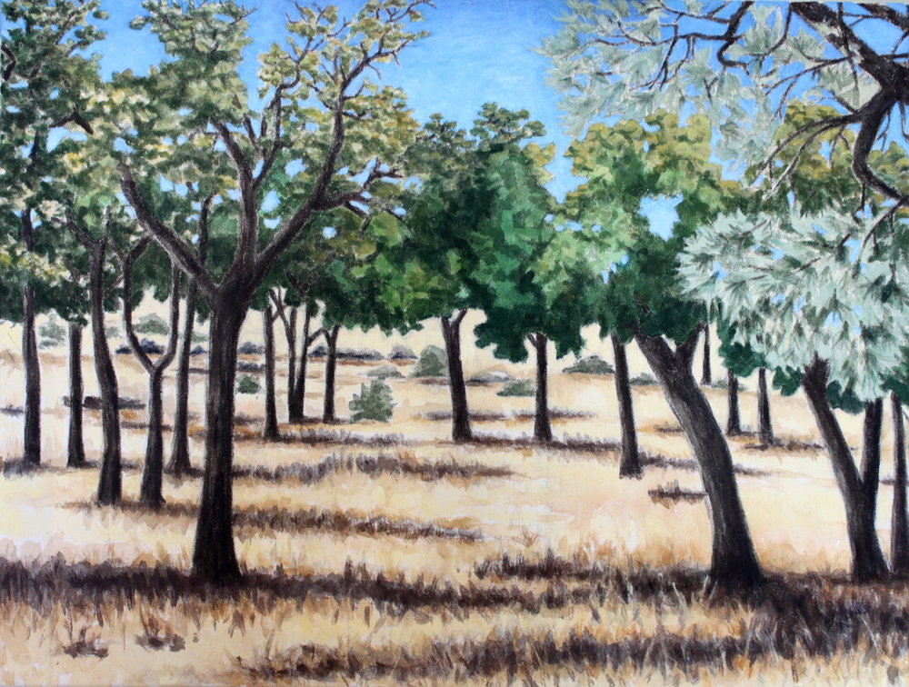 Oak Trees, 2016, 16 x 20 inches, acrylic on canvas