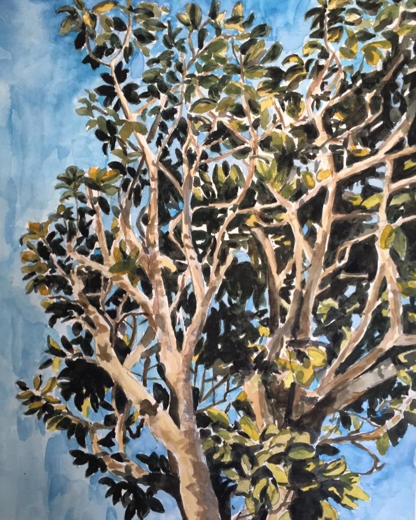 Magnolia, 2018 , 15 x 11 inches, watercolor