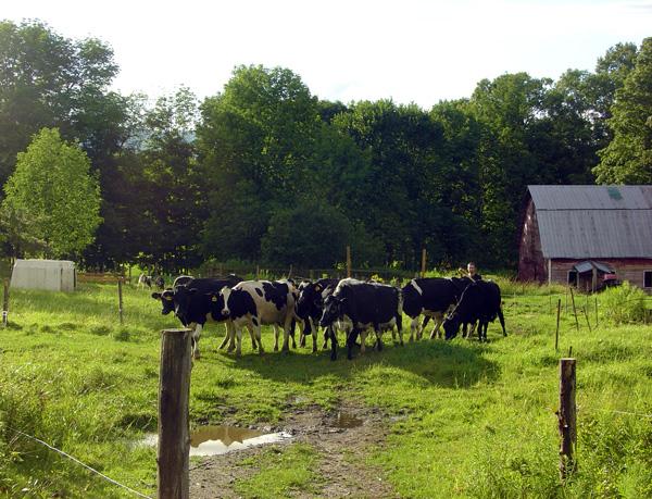 cowsonpasture_1.jpg