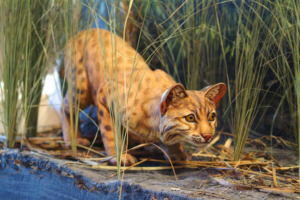Bobcat-sculpture.jpg