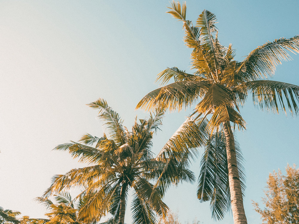 Permanently in love with palm trees. Forever.