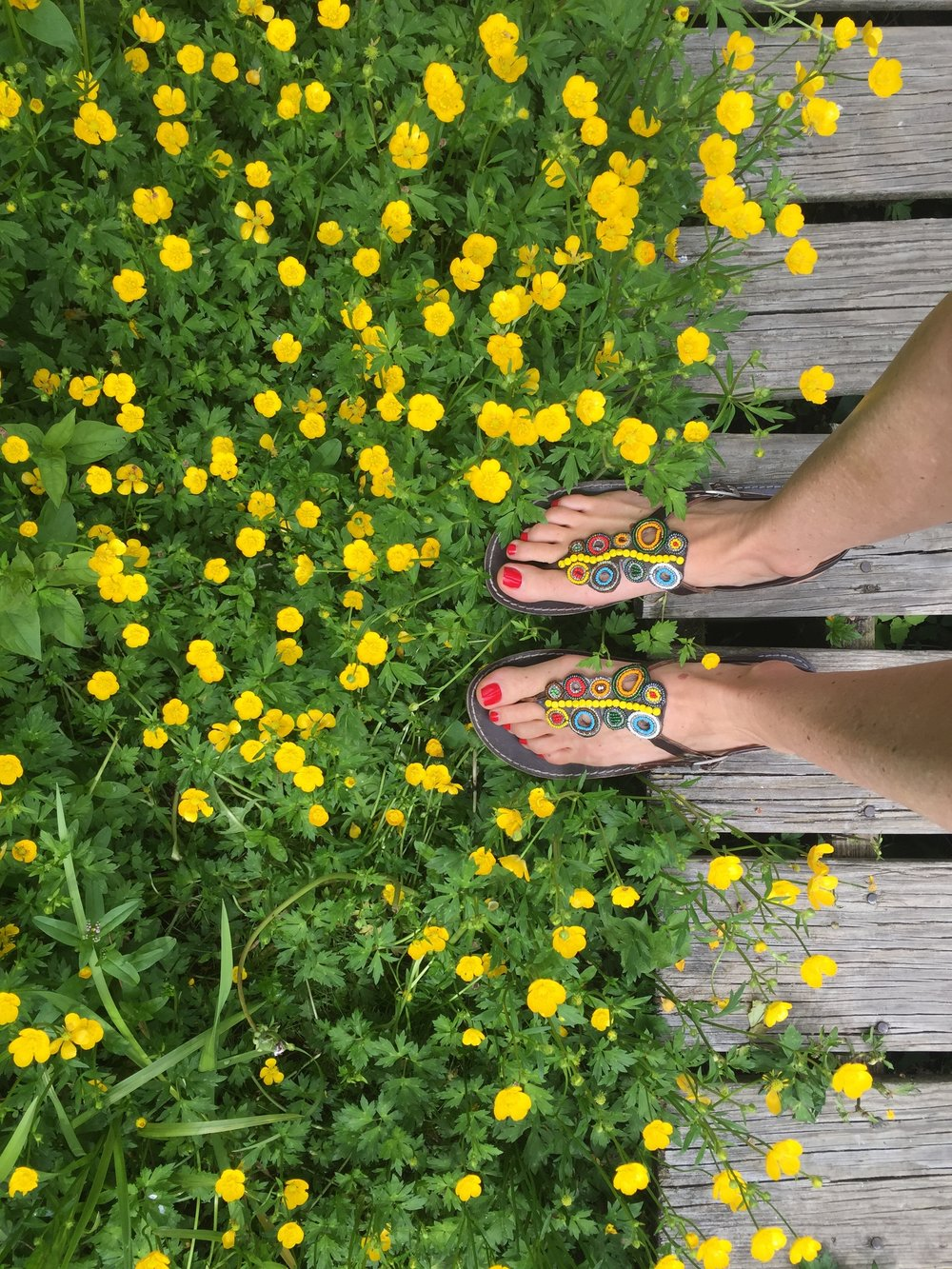 Wazis and spring flowers in Conneticut.