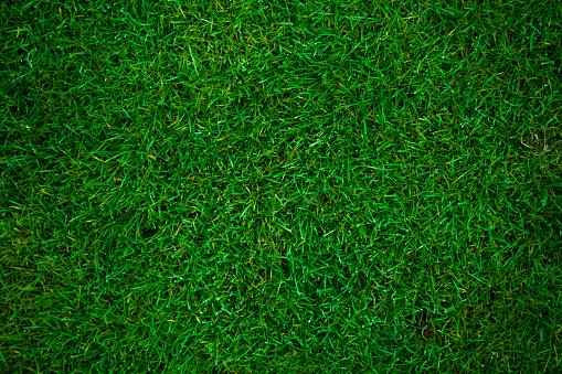 PTT grass.jpg