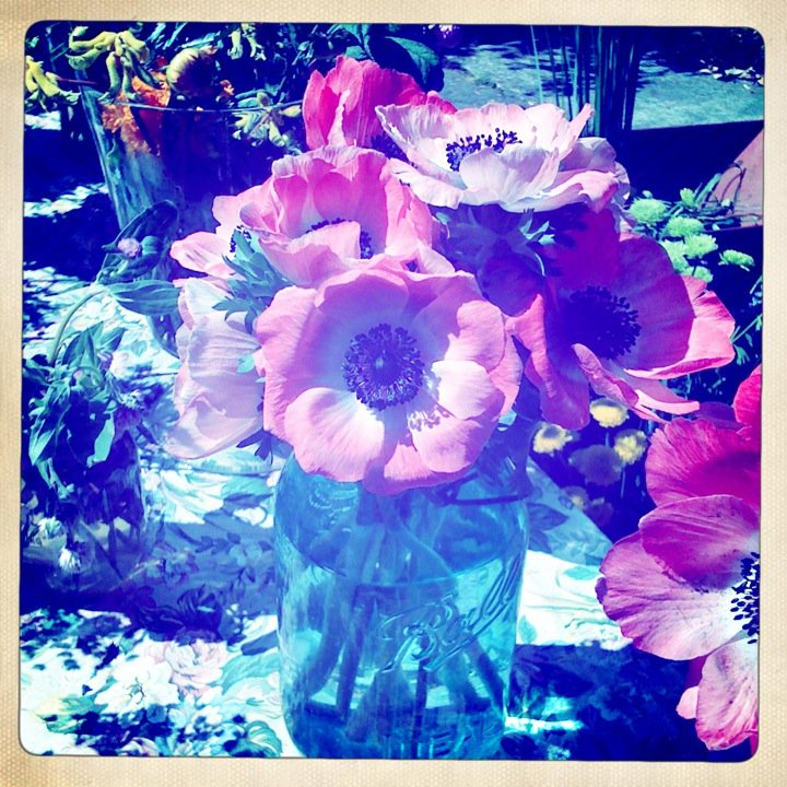 Anemones in the spring