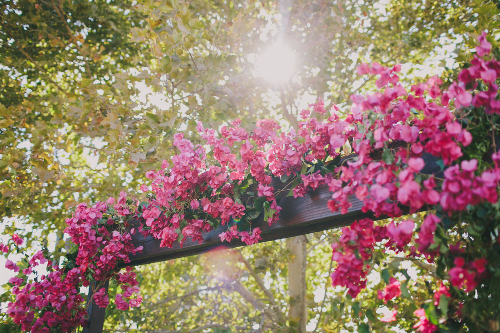 Bougainvillea Wedding Arbor