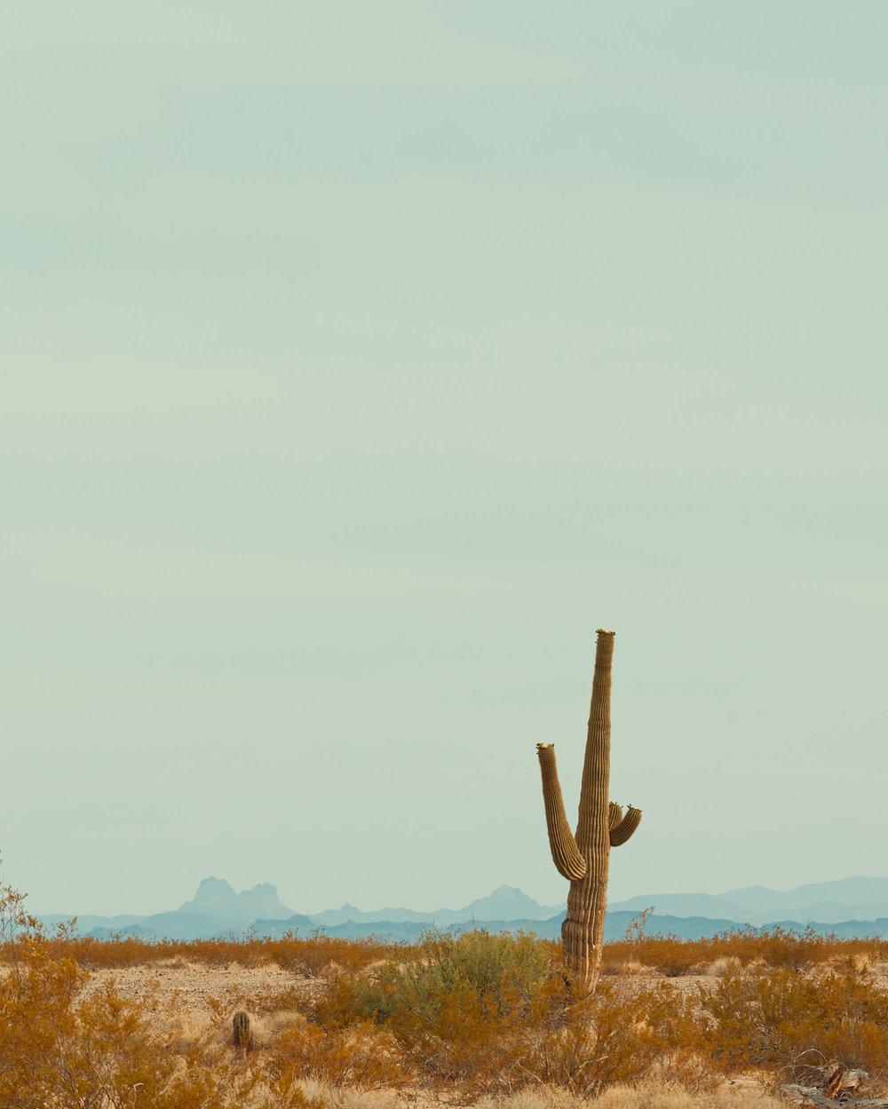 The Desert, 2018.