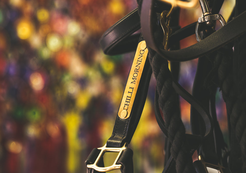 An old friend: William Fox-Pitt keeps his Rio partner's headcollar in pride of place amongst the sprawl of rosettes and the constant hustle and bustle of his Wood Lane tack room. Photo taken for the Chronicle of the Horse's Untacked magazine.