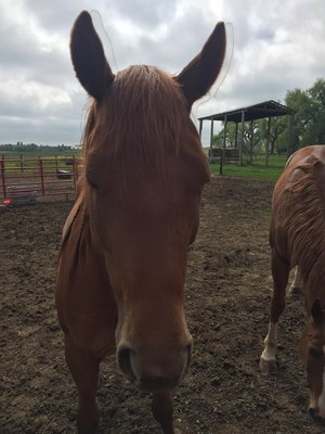 FREEDOM   DOB  MARE  DONATED AUG 09, 2016