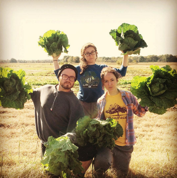 We're serious about our quality cabbage.
