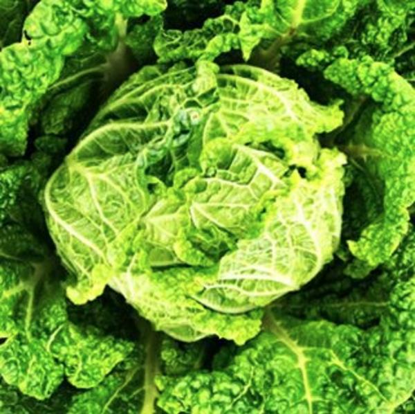 Cabbage: Napa