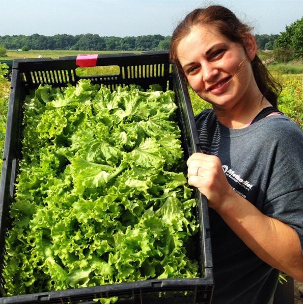 Lettuce: Bibb
