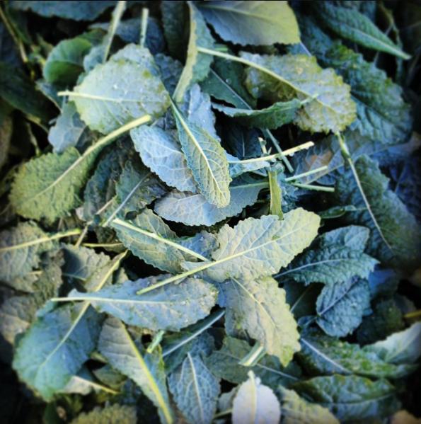 Kale: Tuscan