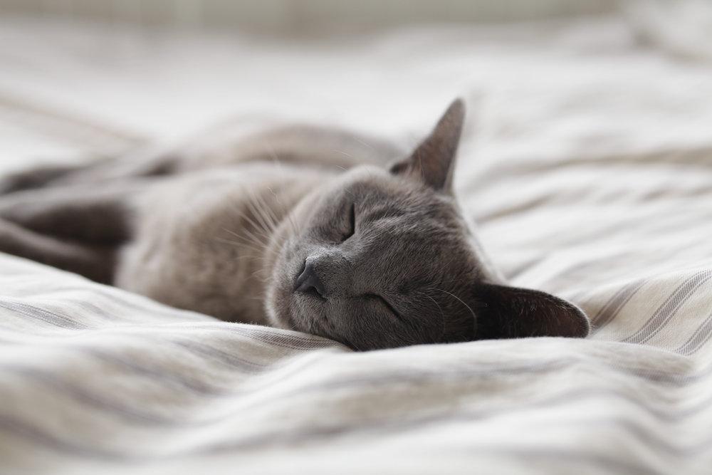Week #10: Sleep & Stress
