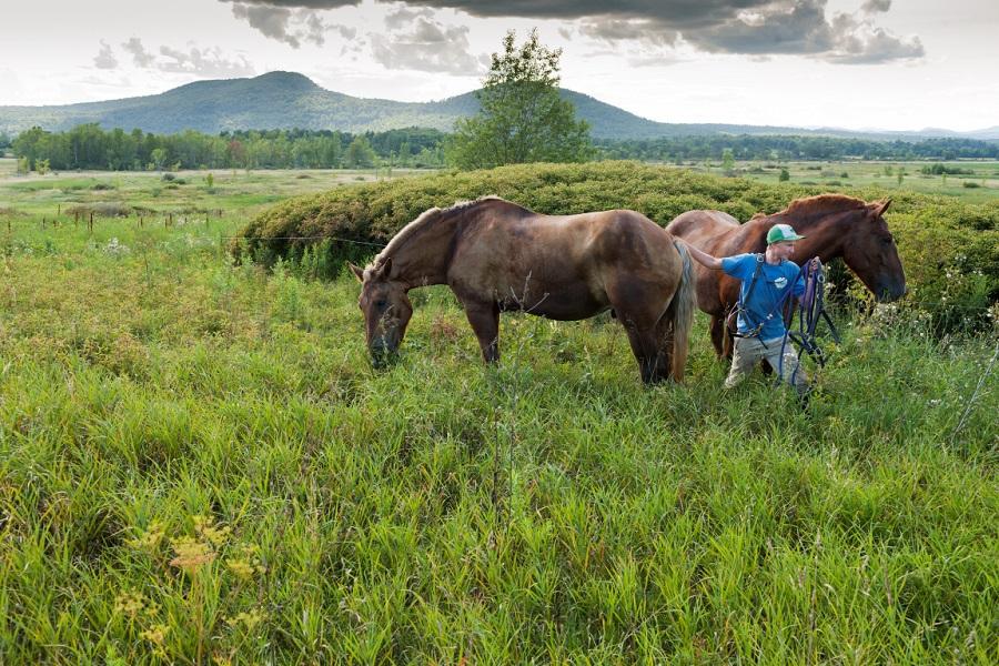 essex farm horses.jpg