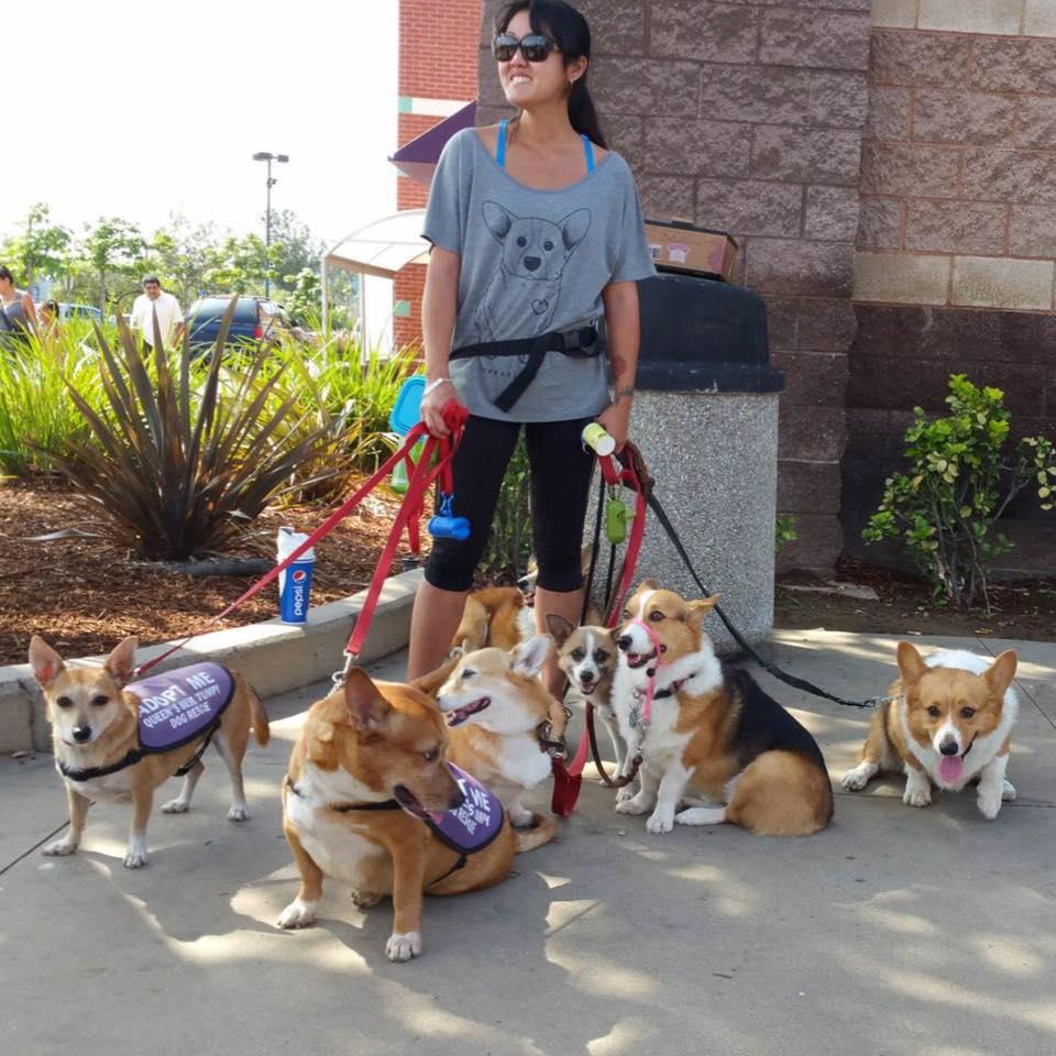 queens best stumpy dog rescue