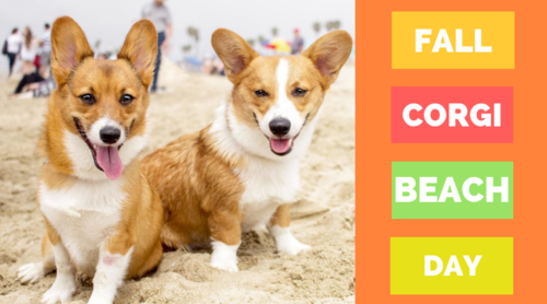 5a52f524 Upcoming Corgi Beach Day Events — So Cal Corgi Nation