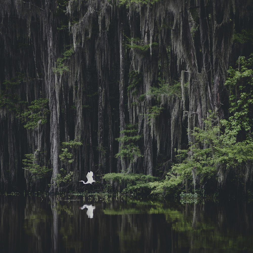 © duston todd_fine art_swamp_biyou_texas.jpg
