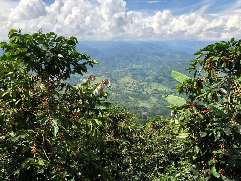 View over andes, near jardin, colombia