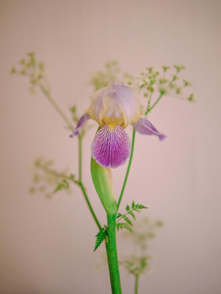 170611_flowers-35.jpg