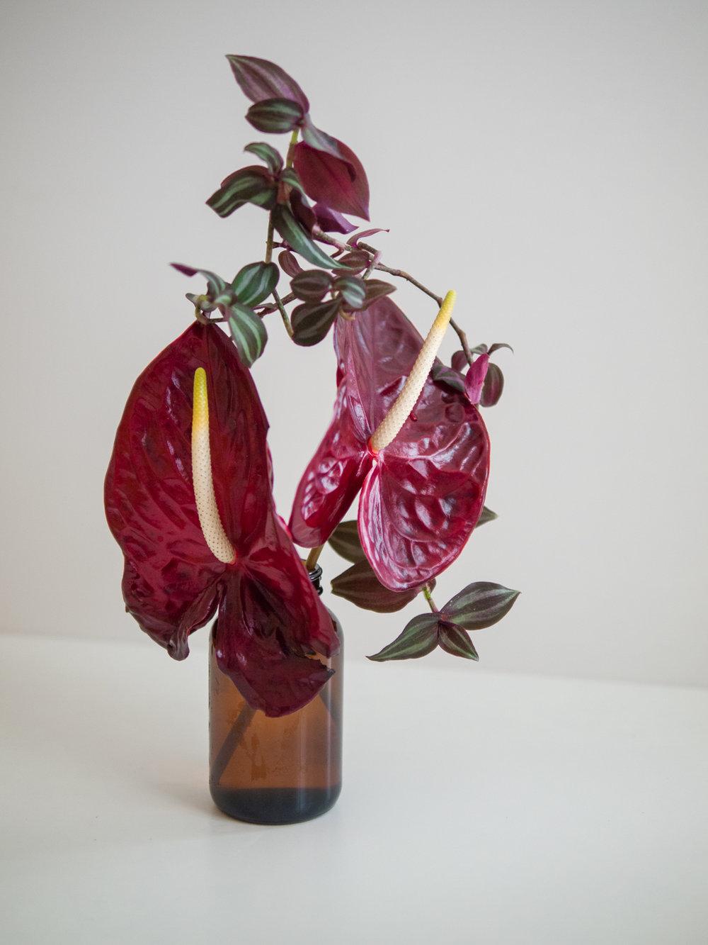 1710_orchid-2b.jpg