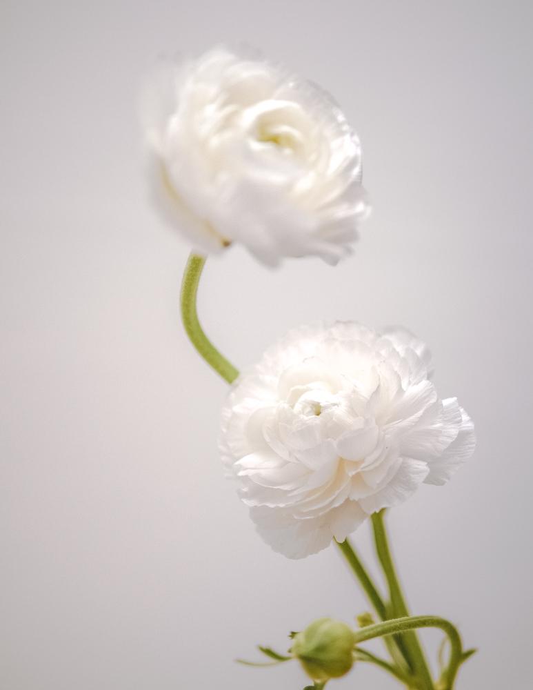 170611_flowers-40.jpg