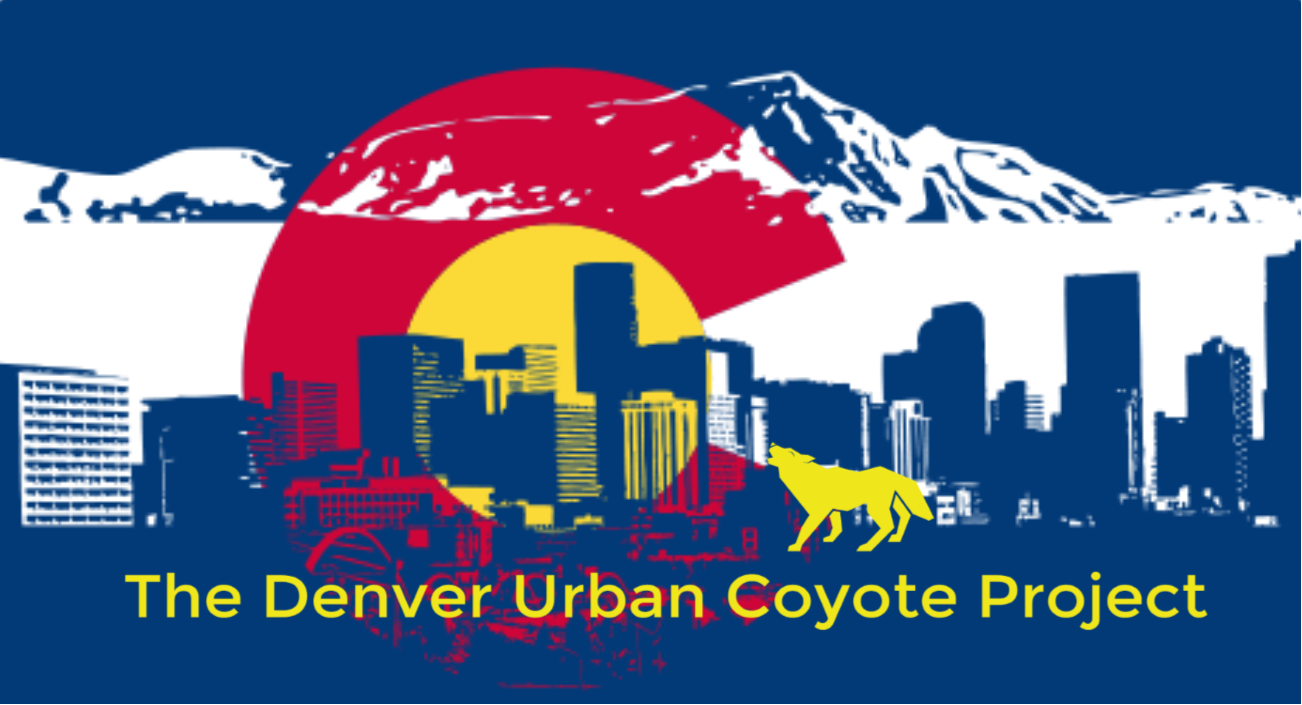 The REAL Wile E. Coyote - Denver Urban Coyote Project