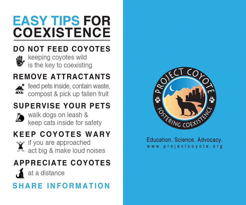 A infographic describing the means you can use to stay safe and coexist with coyotes in your neighborhood.