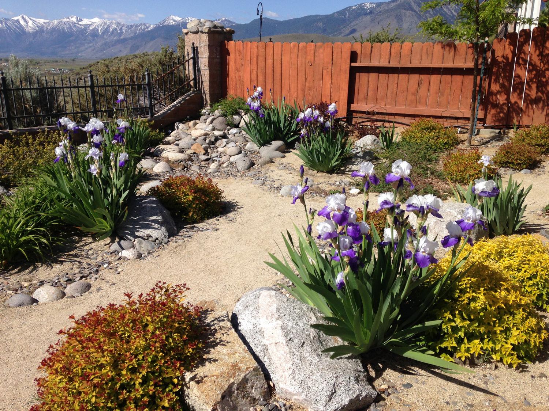 Landscape Process — Green Lizard Landscape LLC
