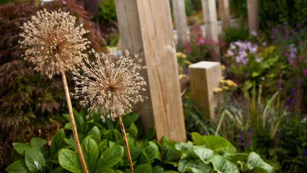 GardenDesignCheshire (48).jpg