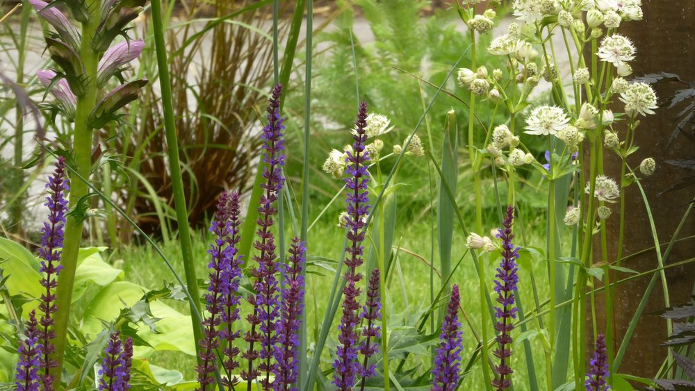 gardendesignbillinge (6).jpg