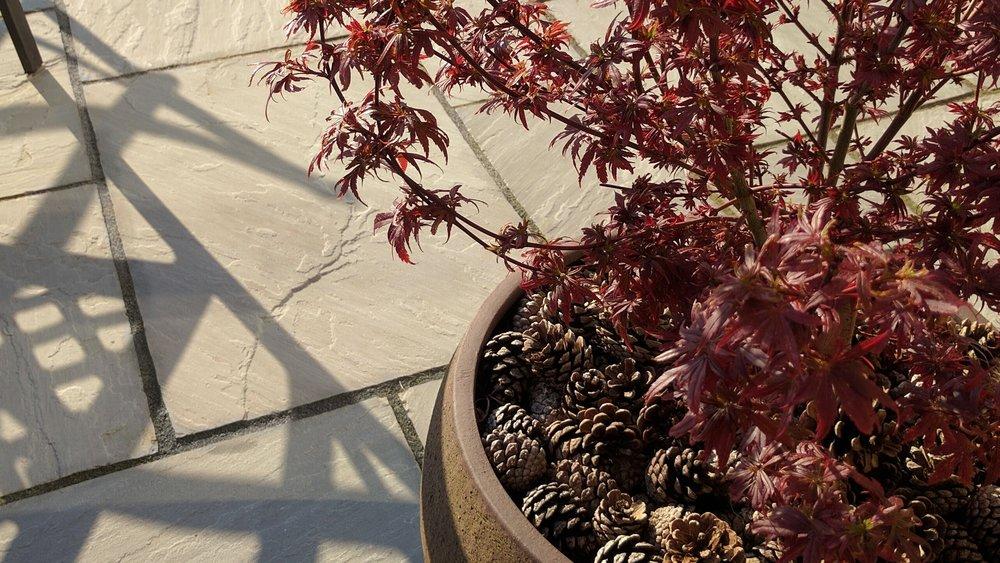 gardendesignbillinge (16).jpg