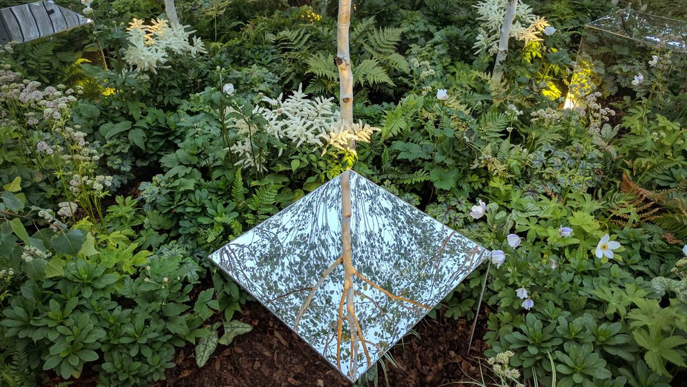 Southport Garden Design: Kuro: Mirrored Cube In Woodland Planting
