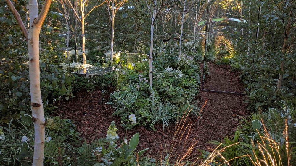 24 SouthportFlowerShow2017 - Low light woodland.jpg