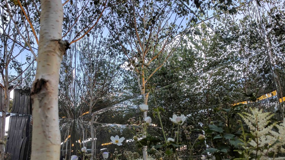Southport Garden Design: Kuro: Betula Reflections Inside The Mirrored Cube