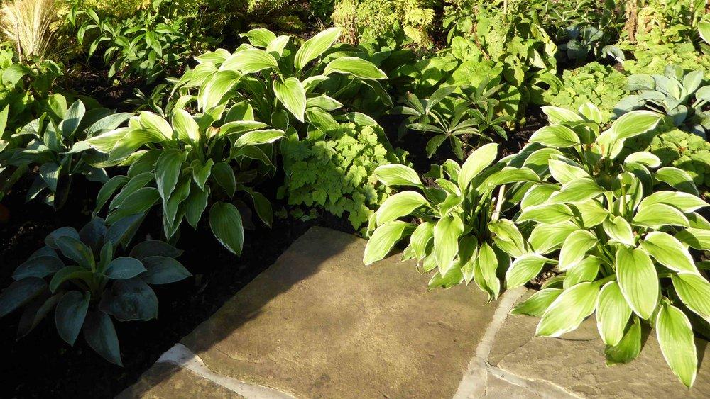 Cheshire Garden Design: The Sun and Shade Garden: Shade Planting